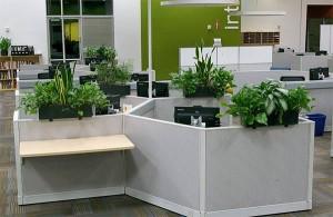 A tudományos kutatások azt mutatják, hogy az irodában lévő szobanövények csökkentik a stresszt