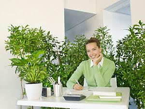 Irodavezető növényekkel